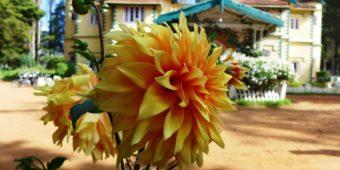 fleur inde du sud