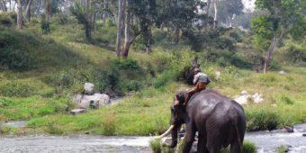 éléphant inde du sud