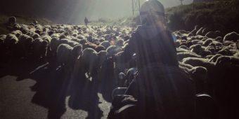 inde himalaya en moto mouton lahaul