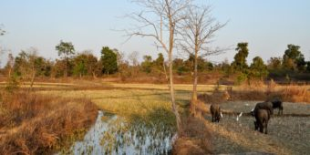 inde madhya pradesh foret reserve naturelle