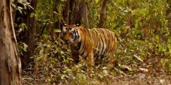 visite Parc National de Ranthambore