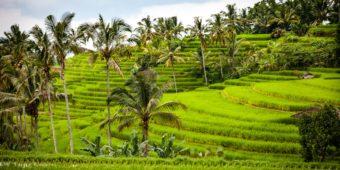rizières sidemen voyage moto