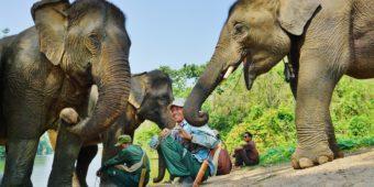 éléphants laos