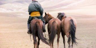 balade a cheval mongolie