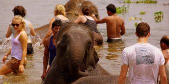 éléphants népal