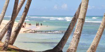 sri lanka plage ocean cocotier