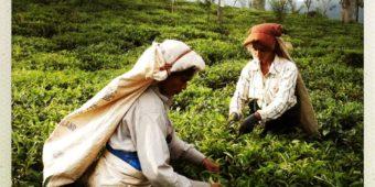 femme travaillant au sri lanka