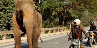 observation éléphant en moto