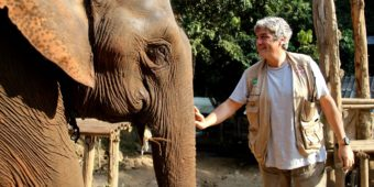 éléphant thailande